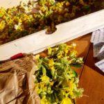 sortie cueillette atelier remède plantes sauvages médicinales grenoble johanna jalbert