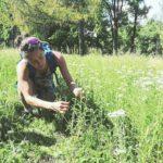 cueillette sauvage johanna jalbert naturopathe
