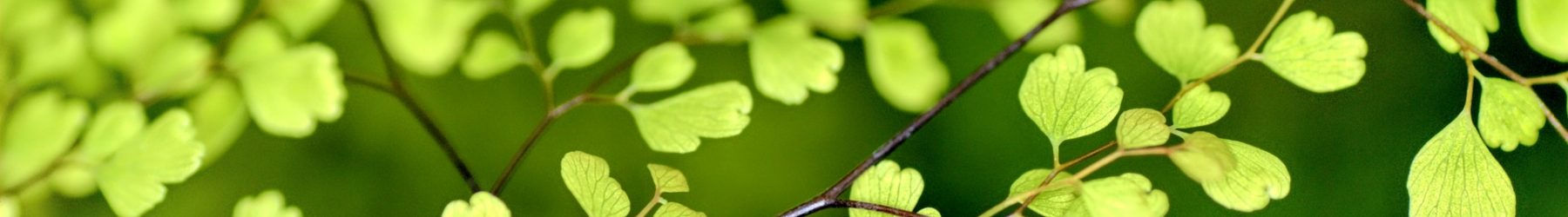 johanna jalbert naturopathe grenoble reflexologie santé naturelle